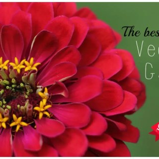 The Best Flowers for Vegetable Gardens