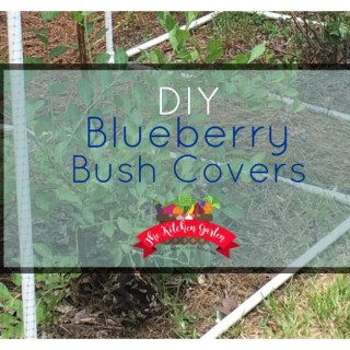 DIY Blueberry Bush Covers