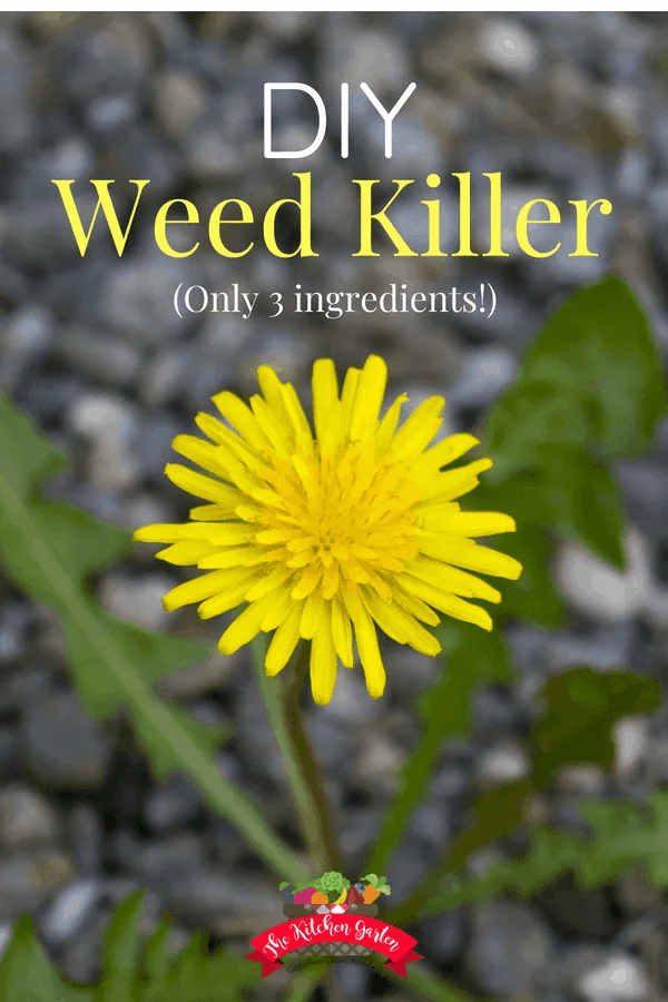This natural weed killer is an easy homemade way to take care of pesky weeds without all of the chemcials in store bought brands. #weedkiller #natural