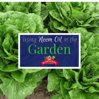 Uses for Neem Oil in the Garden