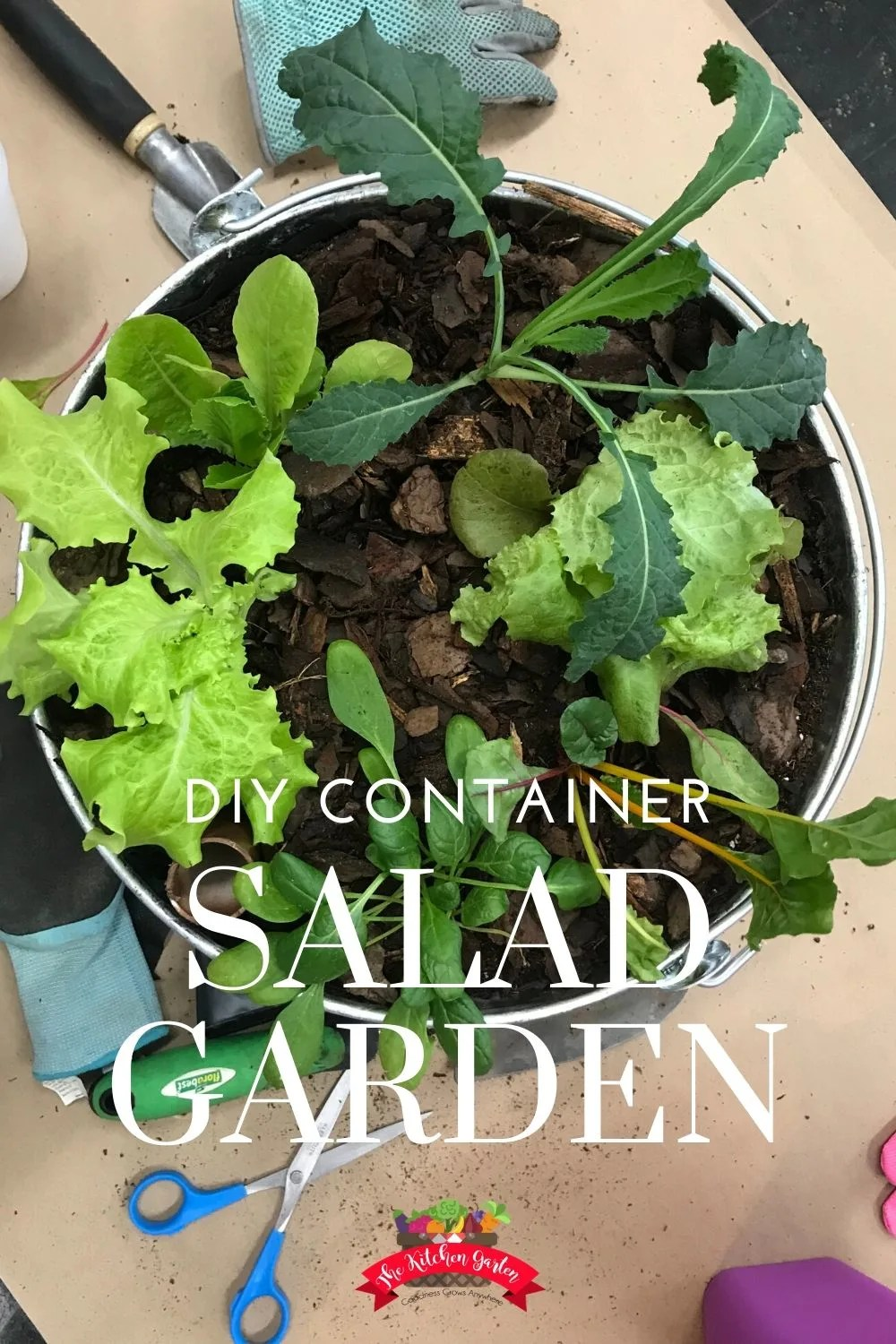 salad garden in galvanized bucket