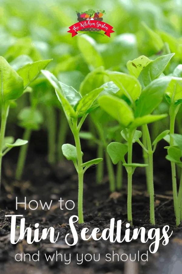 seedlings growing in potting soil