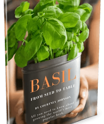 basil from seed to table