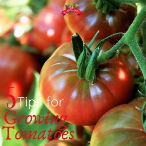 5 Tips for Growing Tomatoes