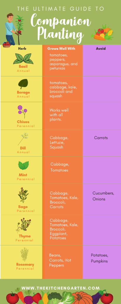 Chart of companion plants and herbs