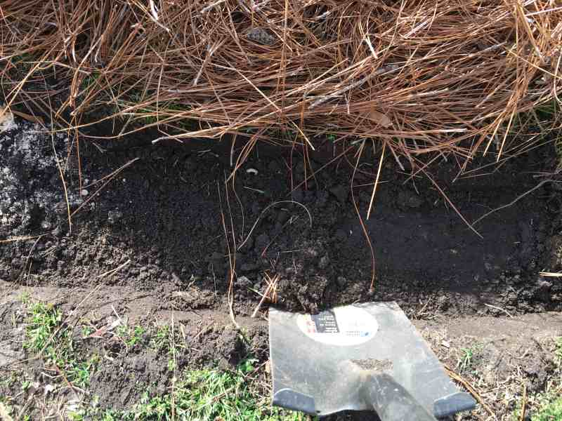 shovel digging to create brick edging for garden