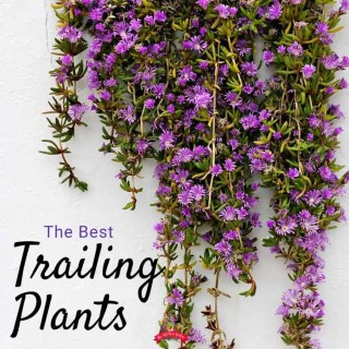 The Best Trailing Plants