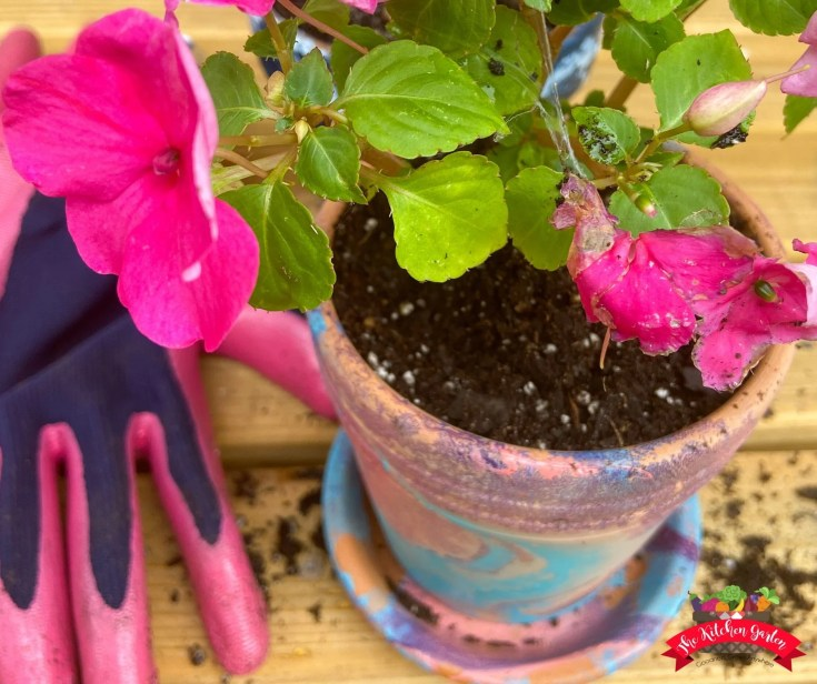 blue, pink, and purple dipped flower pot