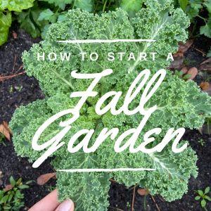 fall garden start