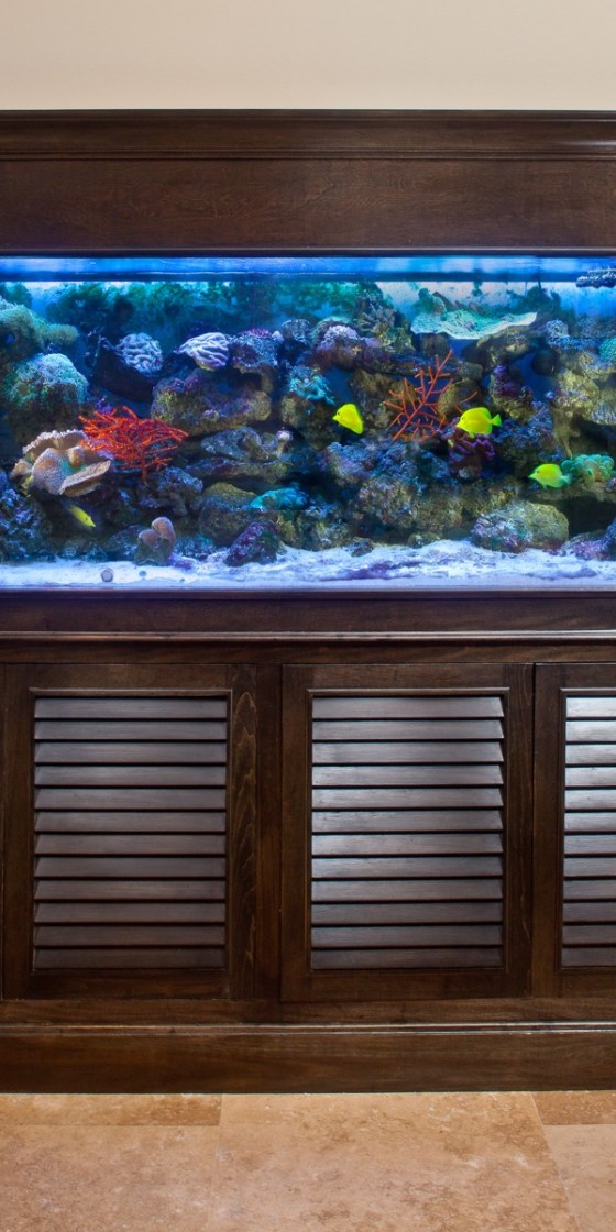 Tommy Bahama Fish Tank