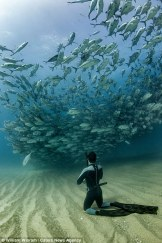 33432D7700000578-3544257-PIC_BY_WILLIAM_WINRAM_CATERS_NEWS_PICTURED_Diver_Fred_Buyle_obse-a-88_1460891613516