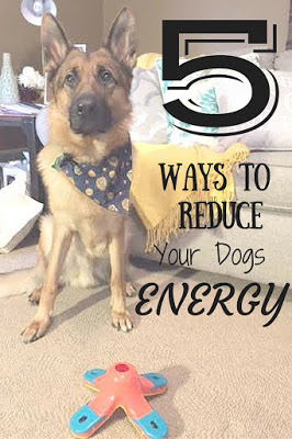 5 Ways To Reduce Your Dogs Energy
