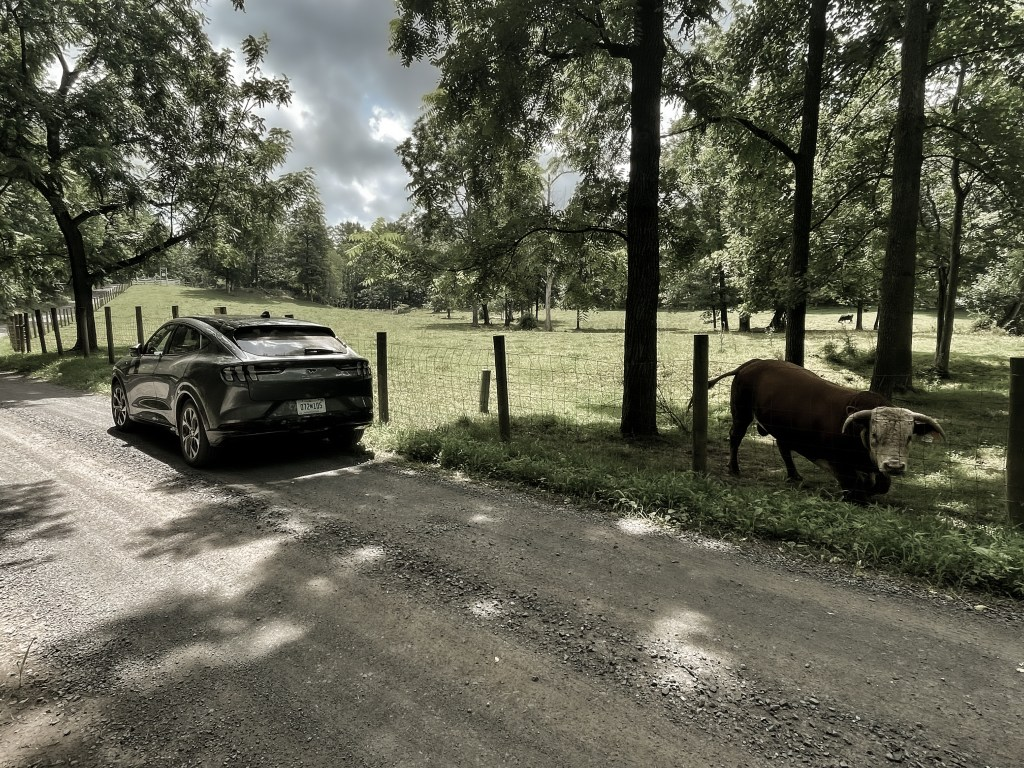 2021 Ford Mustang Mach-E on a Country Road