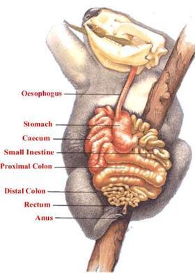 teeth diagram labeled auto ac parts digestive system | the koala