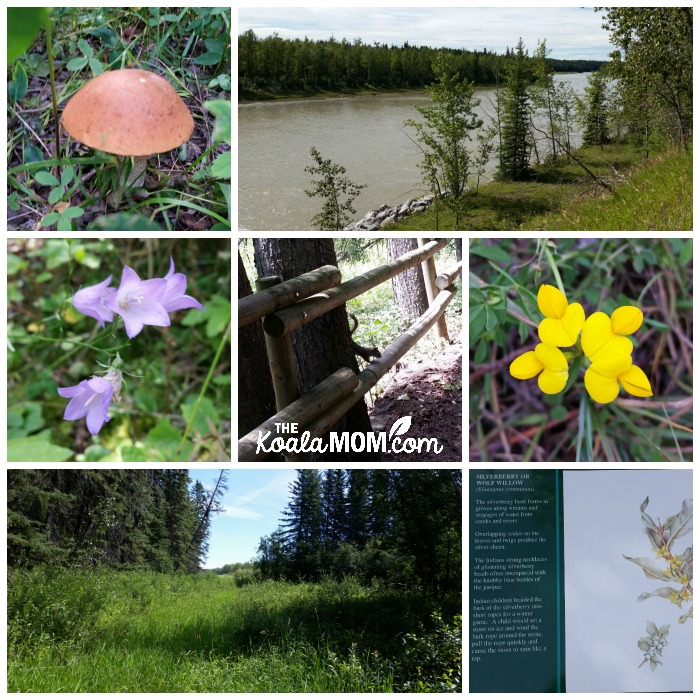 Exploring Rocky Mountain House National Historic Site - flowers, squirrels, river, etc.