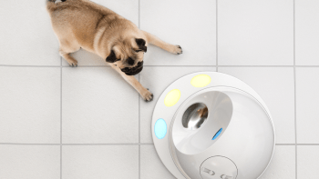 CleverPet Hub with Pug