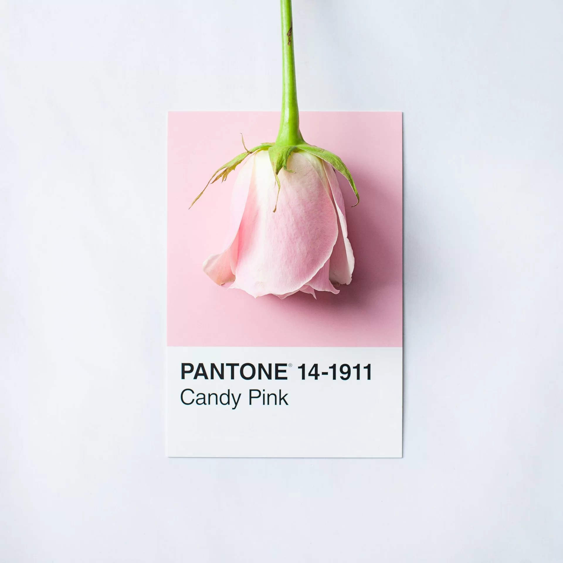 Find the perfect Pantone color for your next project