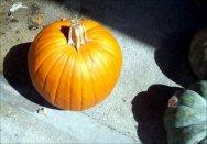 It's Pumpkin time ! !