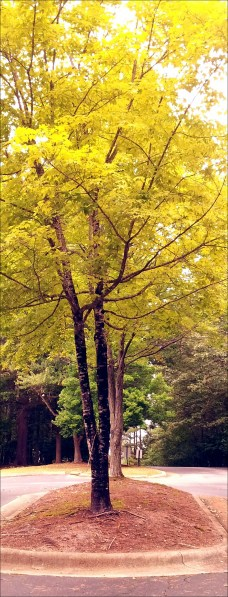 I <3 the color of this tree