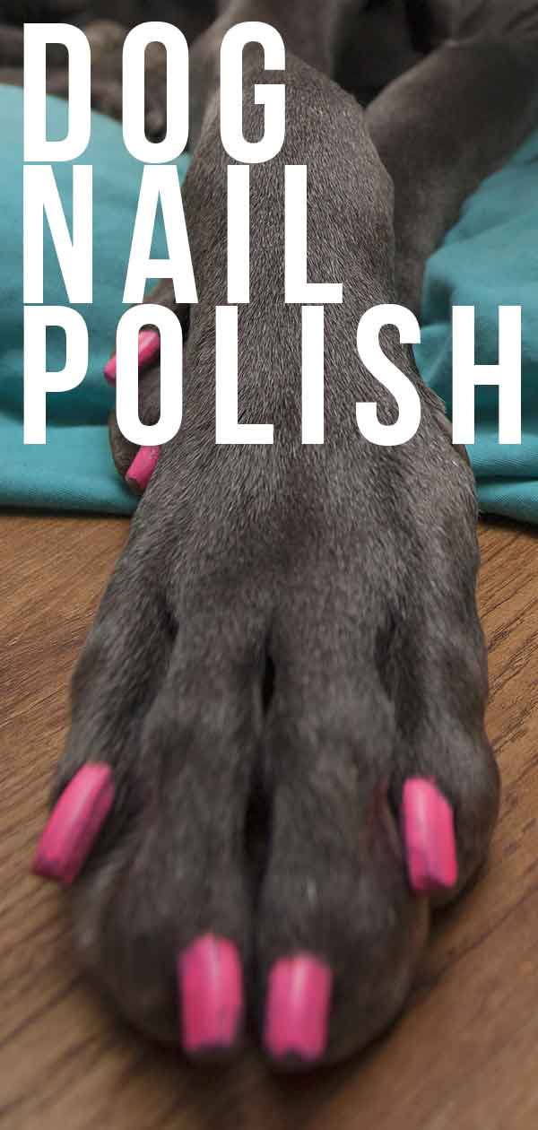 Can I Paint My Dog's Nails : paint, dog's, nails, Polish:, Which