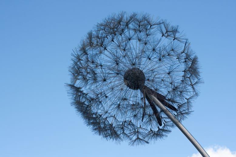 #mysundayphoto -blue skys