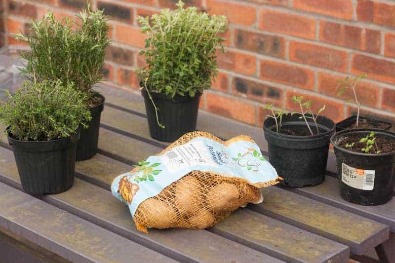 Starting gardening with children