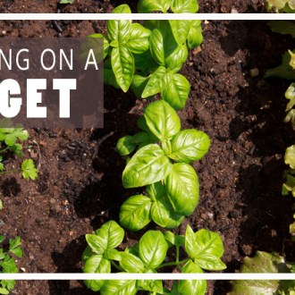 Weekly Gardening Update, 6/22!