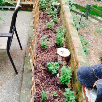 Weekly Gardening Update: 4/27!