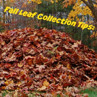 Gardening On A Budget: Fall Leaf Collection!