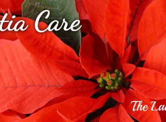 Gardening On A Budget: Poinsettia Care!