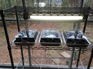 DIY Indoor Organic Gardening Setup!