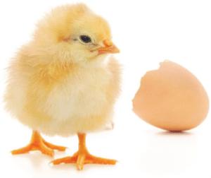 Egg Hatched