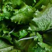 Please romaine calm: CDC warns against the leafy green