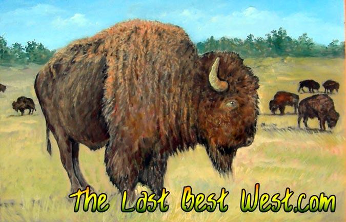675_buffalo_432 jerry potts - scout
