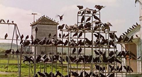 CrowsHitchcock