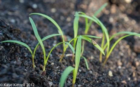 kk_lb-sprouts-5