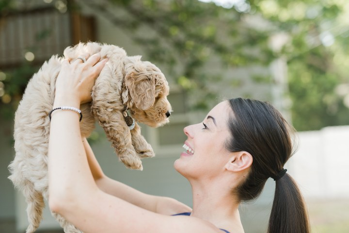 The Ultimate Puppy Guide