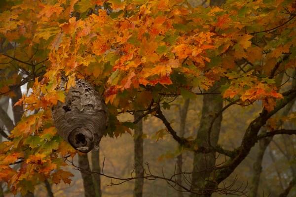 Autumn Splendor - Laurel Of Asheville