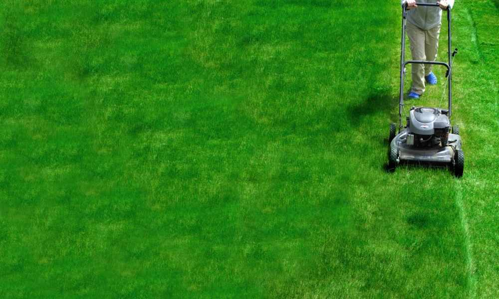 Lawn Care Business Names The Lawn Solutions