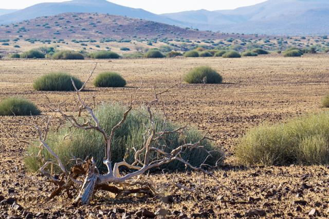 The scenic landscape at Palmwag.