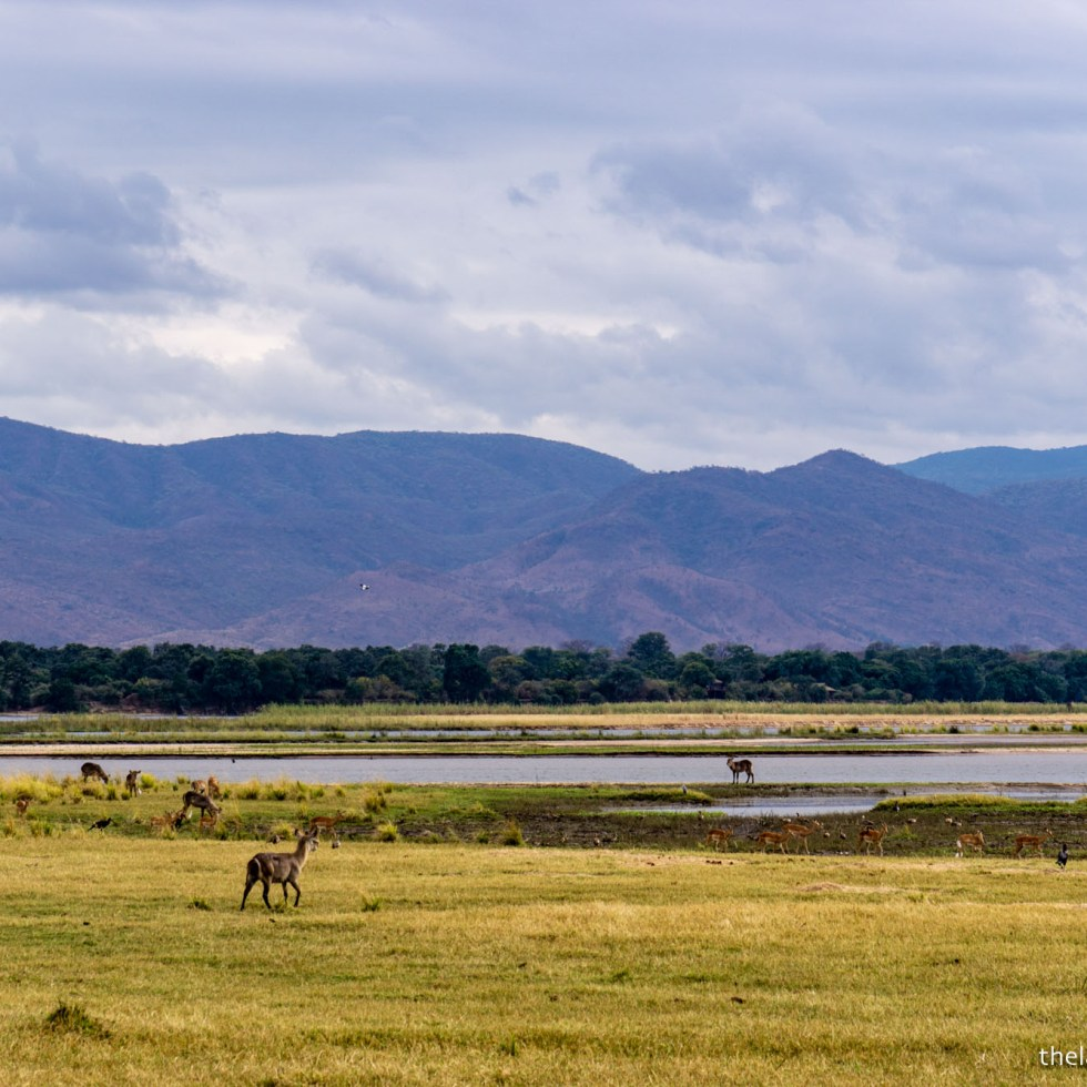 mana pools floodplain view