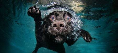 underwater-puppies-are-everything-also-in-a-coffee-table-book