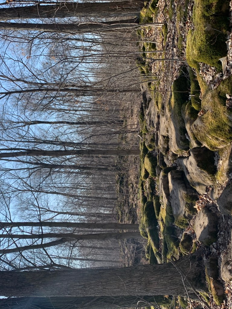 rockway conservation area