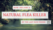 How I Became A Natural Flea Killer