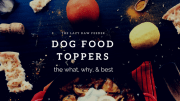 What About Dog Food Toppers