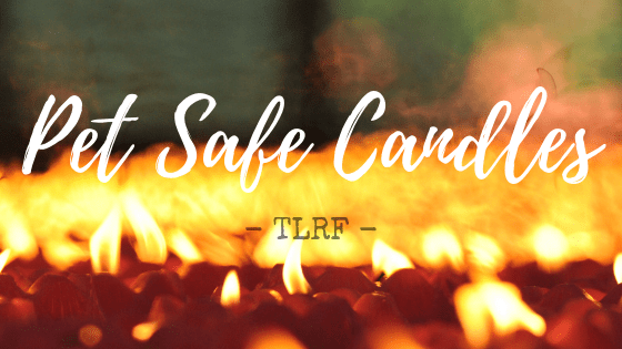 Pet Safe Non-Toxic Candles by The Lazy Raw Feeder