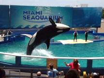 Miami Seaquarium Killer Whale Dolphins And Sea Lions