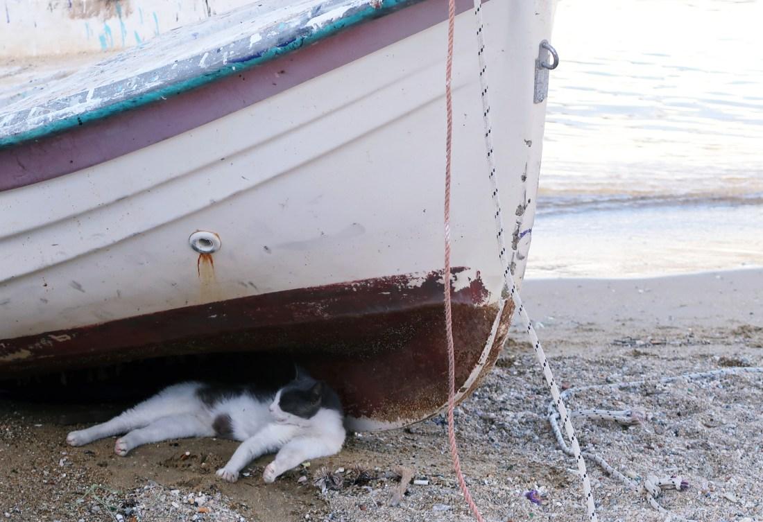 Cat under boat in Mykonos
