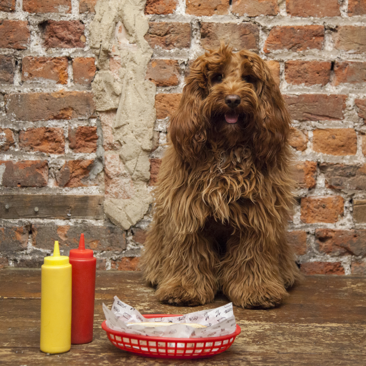 Bubbledogs Dog Tea Party