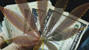 currency capital money cash leaf bills